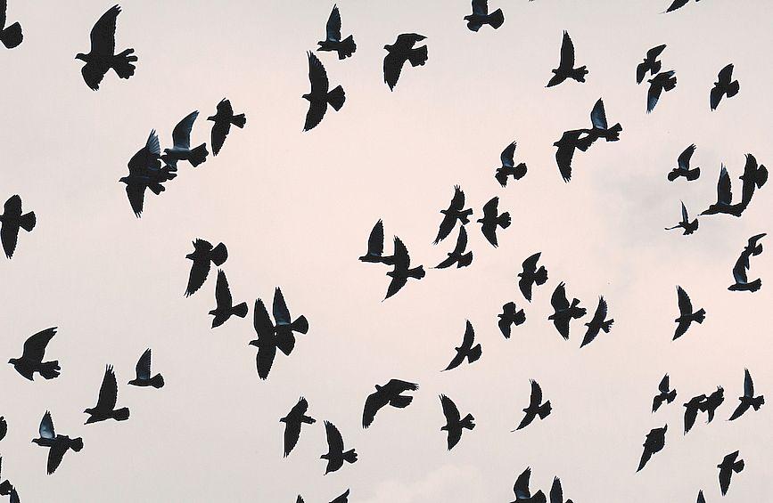 corvi-in-volo